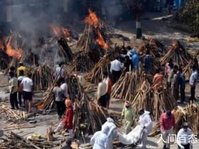 印度德里将狗用火葬场改为人用有什么看法