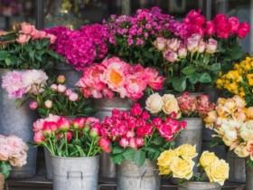 各种花卉的花语是什么?各种花卉的花语概述